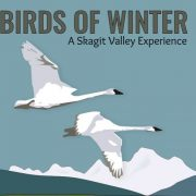 birds_of_winter_skagit