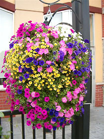 Hanging Baskets-