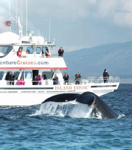 Whale_Watching_La_Conner_WA
