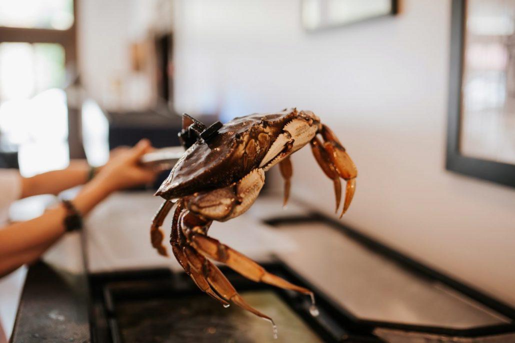 la conner seafood
