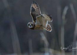 skagit_birds_of_winter_nancy_crowell