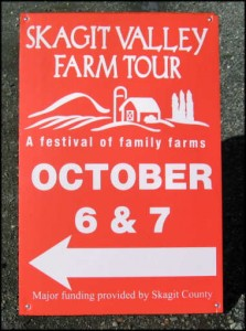 skagit valley tulip festival return visits - festival of family farns