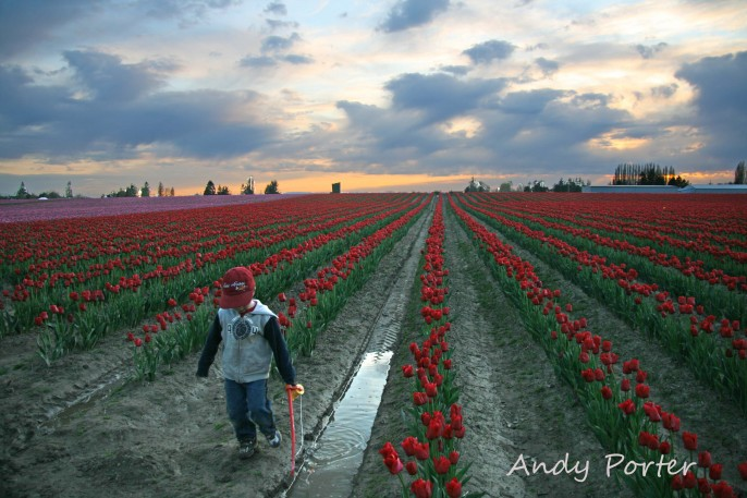 tulip_festival_photography_kids_andy_porter
